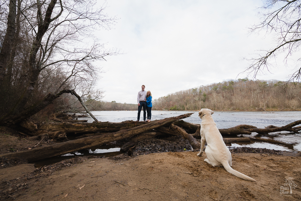 Engaged couple standing on logs in Chattahoochee River while yellow lab watches them