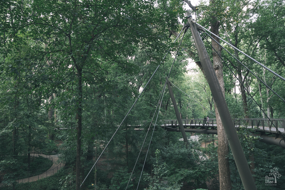 Two black women holding hands while walking over a suspension bridge in the forest.